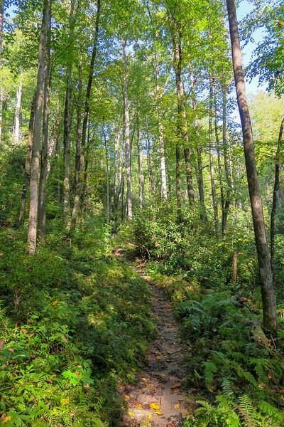 Caney Bottom Trail -- 2,730'