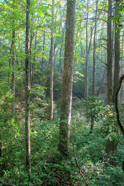 Caney Bottom Trail -- 2,930'