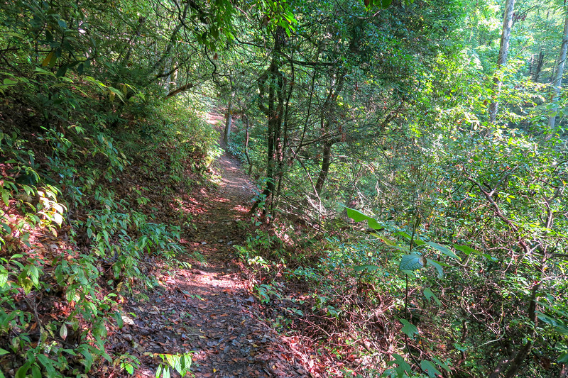 Caney Bottom Trail -- 2,740'