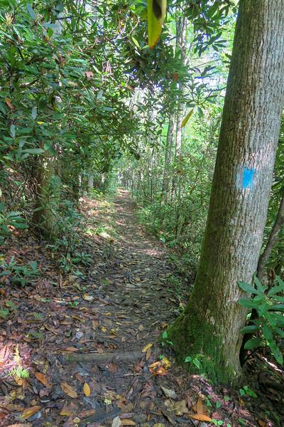 Caney Bottom Trail -- 2,820'