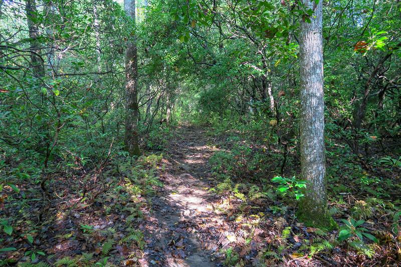 Caney Bottom Trail -- 2,980'