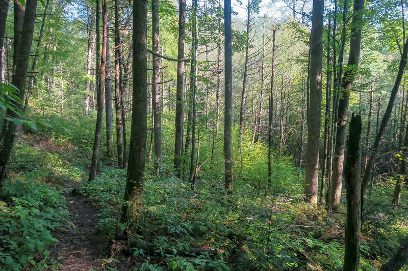 Caney Bottom Trail -- 2,750'