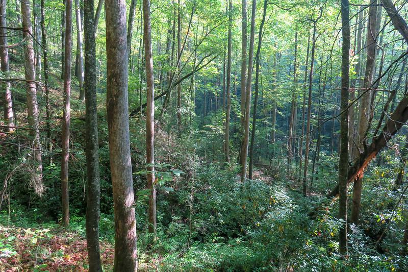 Caney Bottom Trail -- 2,780'
