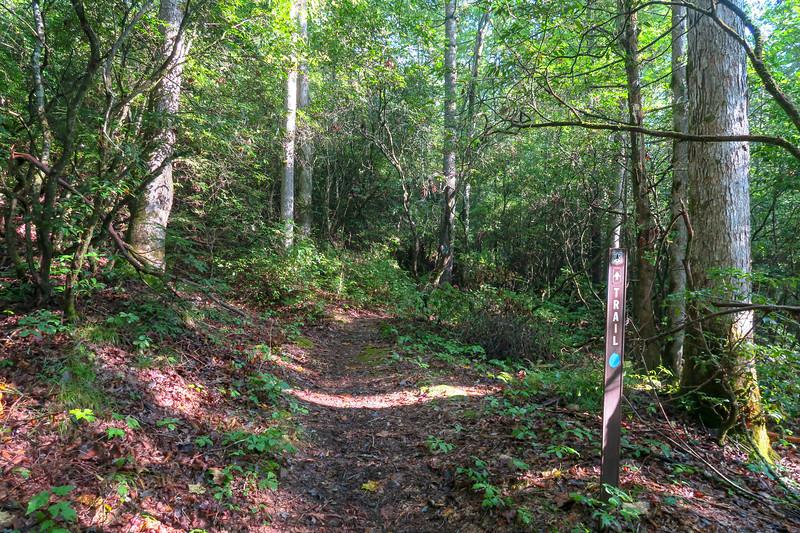 Caney Bottom Trail -- 2,720'