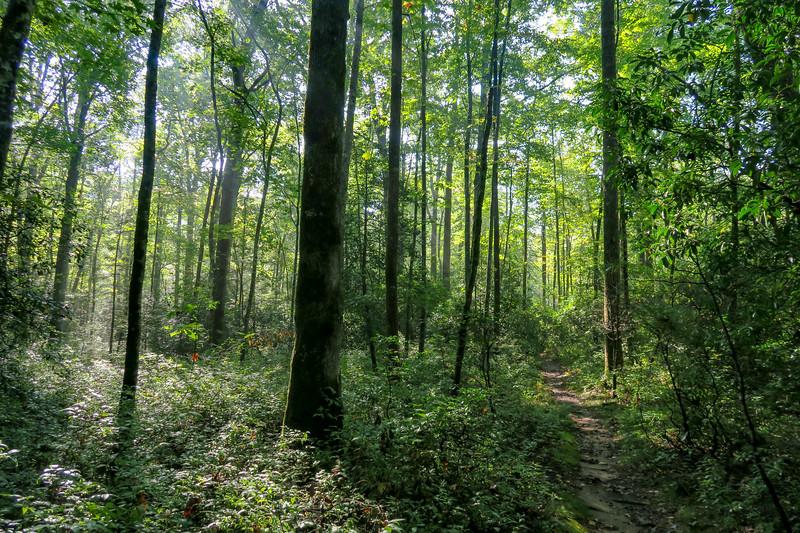 Caney Bottom Trail -- 3,000'