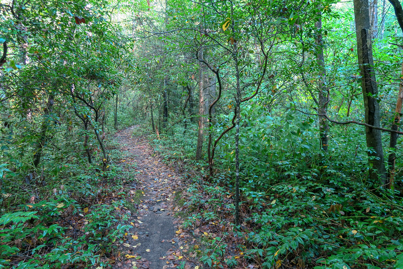 Caney Bottom Trail -- 2,900'