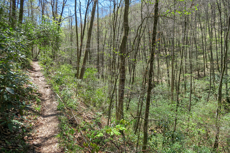 Cantrell Creek Trail -- 2,750'
