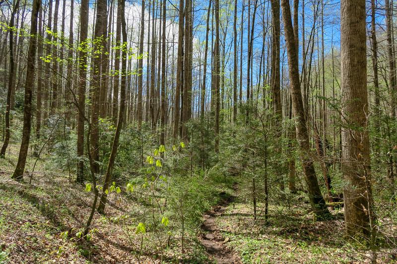 Cantrell Creek Trail -- 2,870'