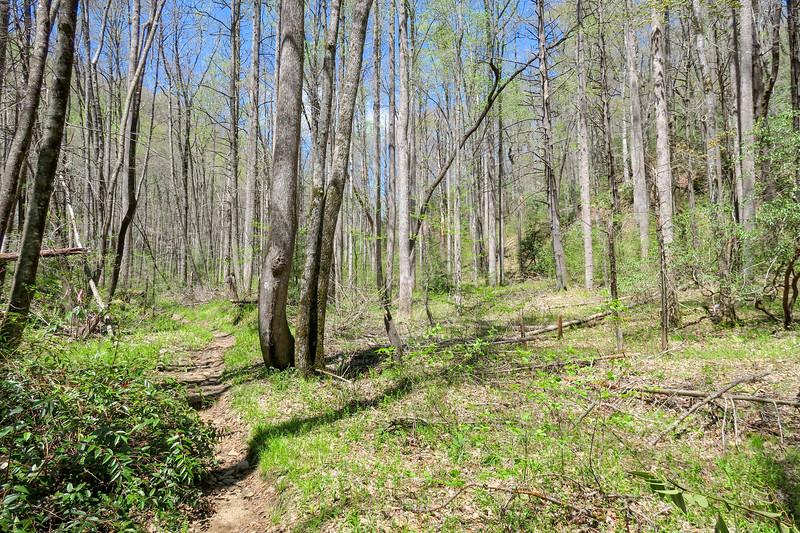 Cantrell Creek Trail -- 2,660'