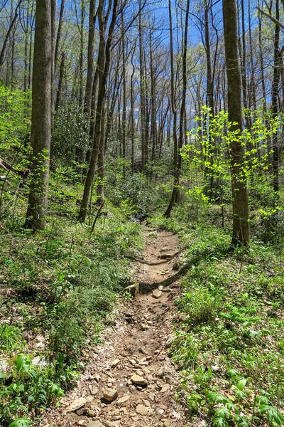 Cantrell Creek Trail -- 2,720'