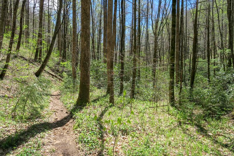 Cantrell Creek Trail -- 2,840'