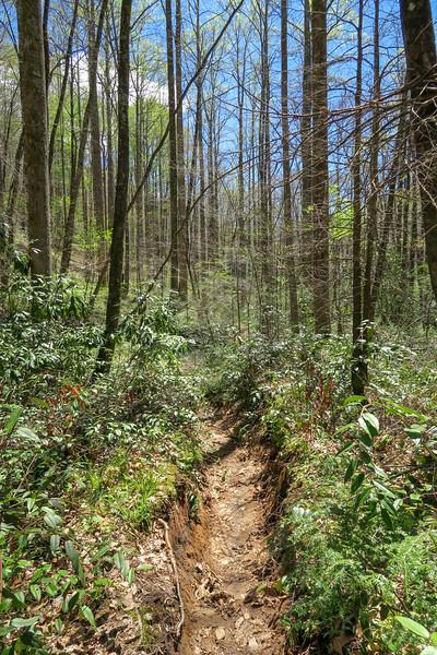 Cantrell Creek Trail -- 2,850'