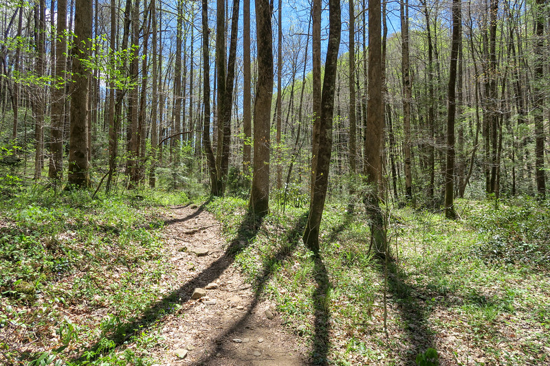 Cantrell Creek Trail -- 2,770'