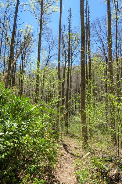 Cantrell Creek Trail -- 2,700'