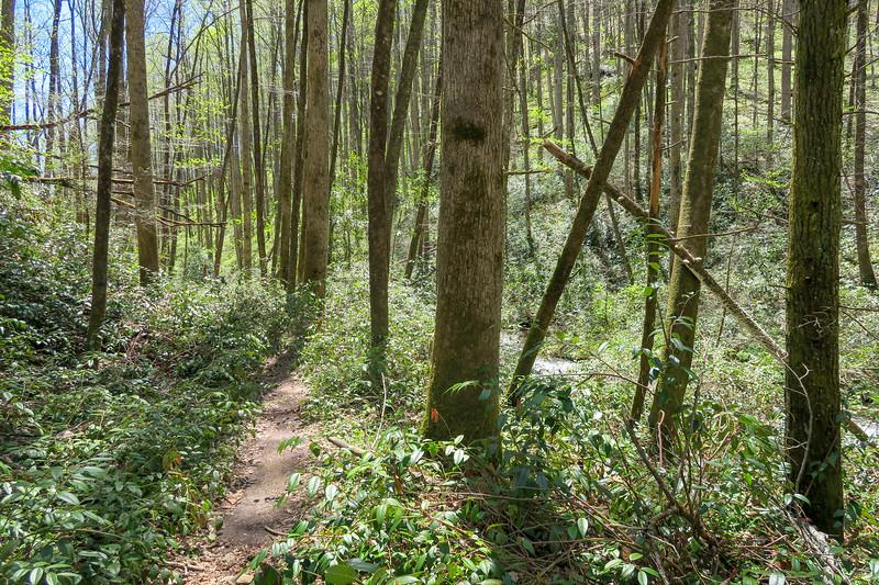 Cantrell Creek Trail -- 2,760'