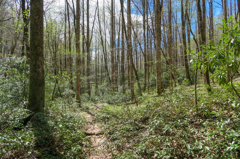 Cantrell Creek Trail -- 2,860'