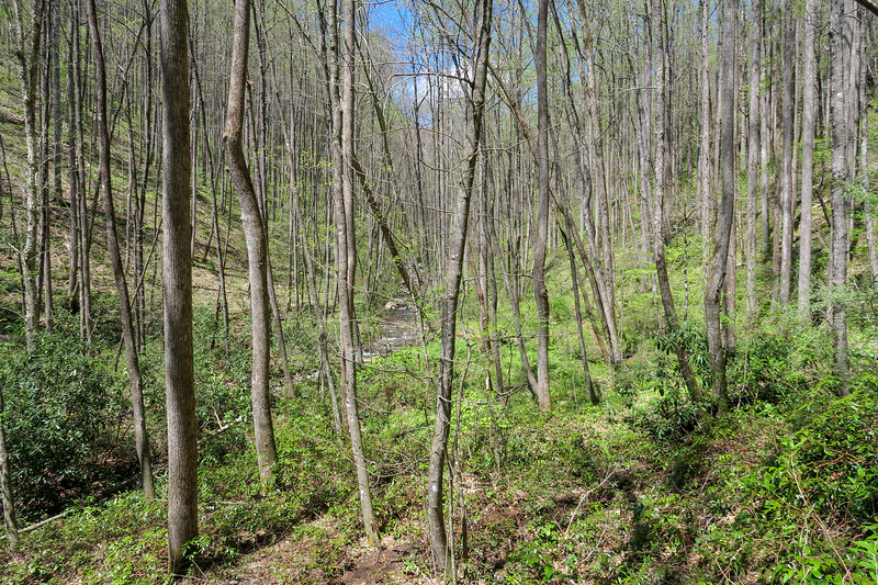 Cantrell Creek Trail -- 2,740'