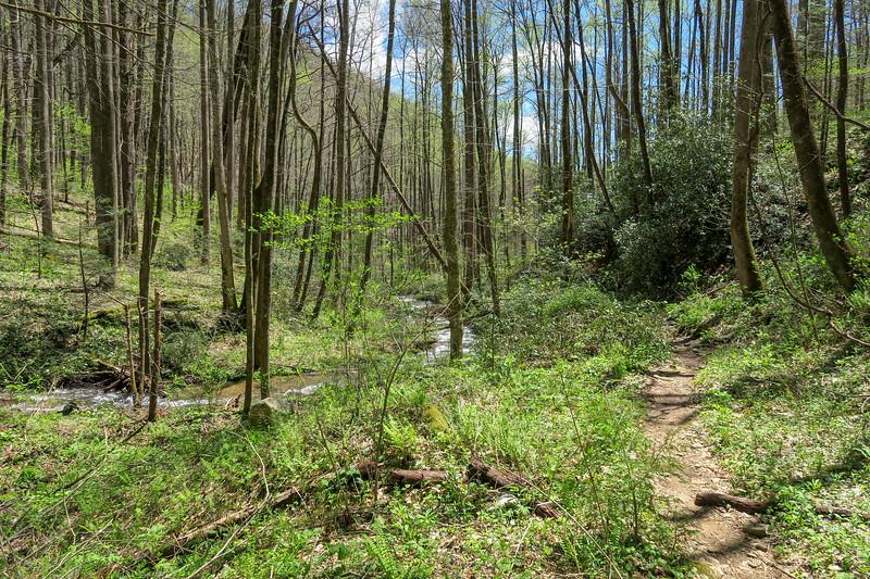 Cantrell Creek Trail -- 2,810'