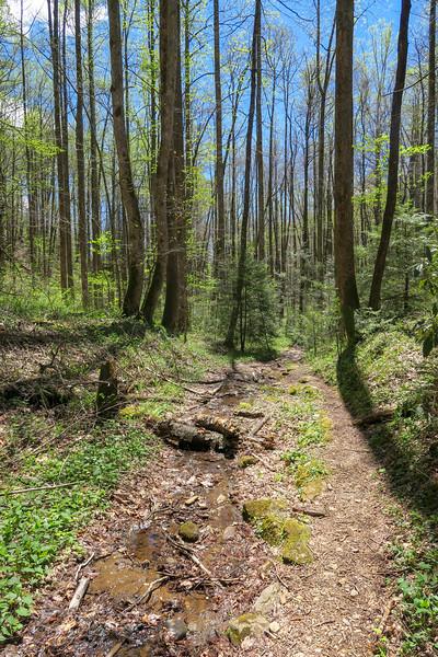 Cantrell Creek Trail -- 2,830'