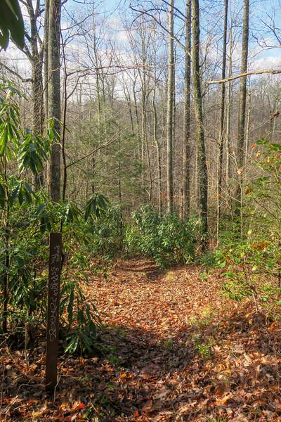 Case Camp Ridge/Seniard Trail Junction -- 3,440'