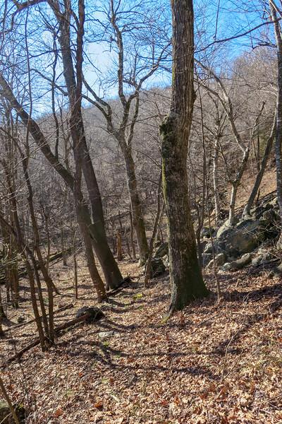 Case Camp Ridge Trail -- 4,320'