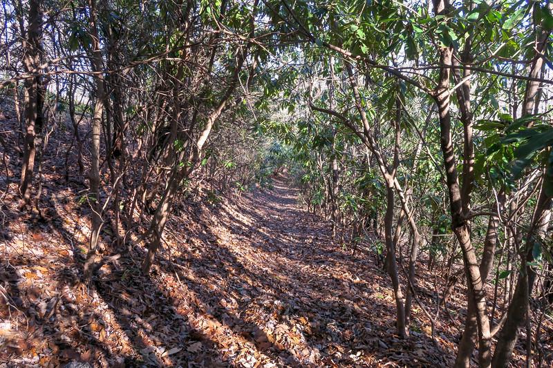 Case Camp Ridge Trail -- 3,400'