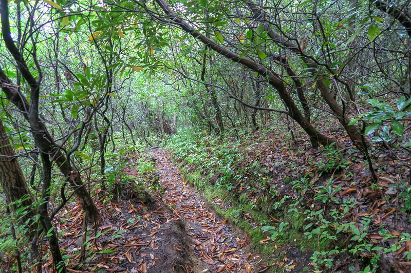 Cat Gap Loop Trail -- 3,180'