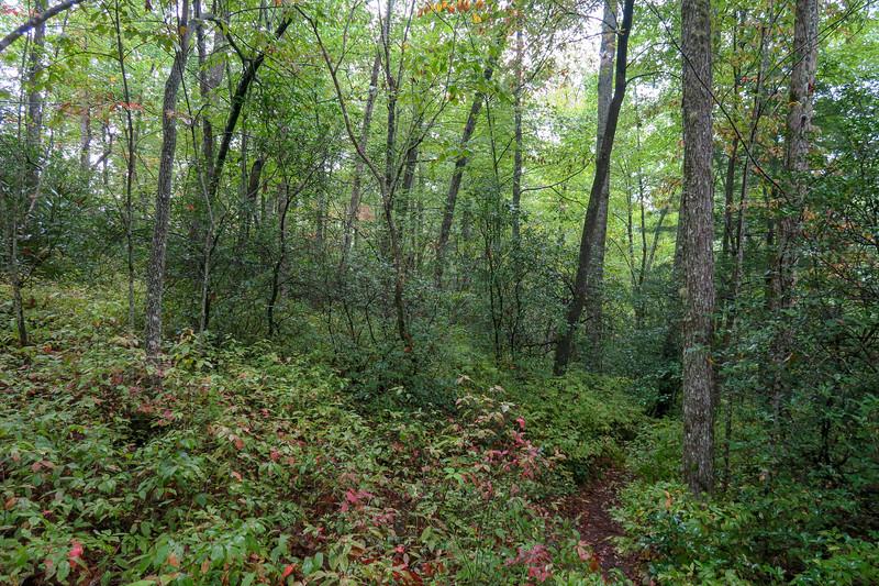 Cat Gap Loop Trail -- 3,100'