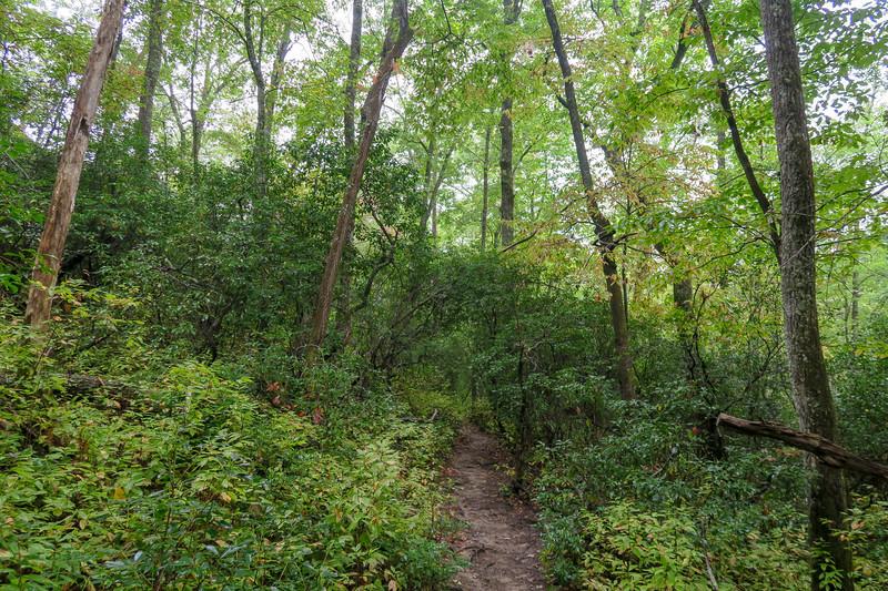 Cat Gap Loop Trail -- 2,800'