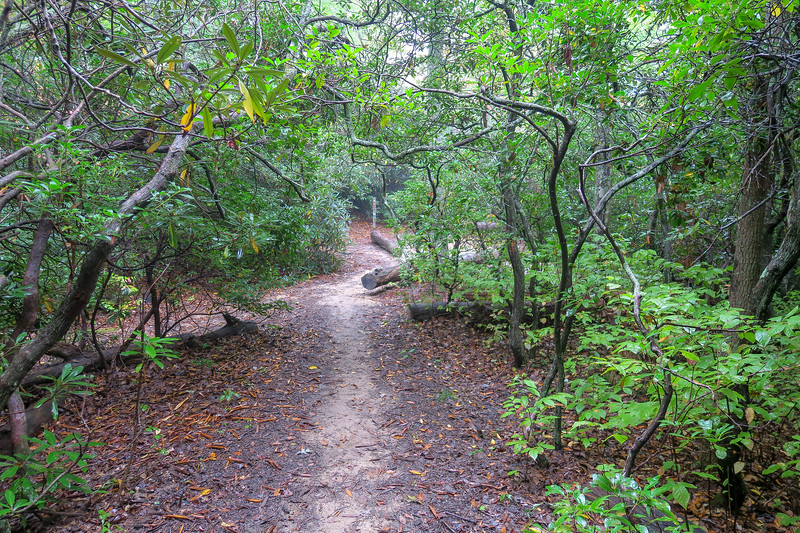 Cat Gap Loop/Art Loeb Trail Junction (Cat Gap) -- 3,350'