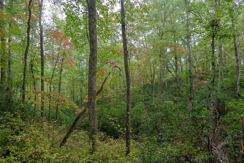 Cat Gap Loop Trail -- 2,750'