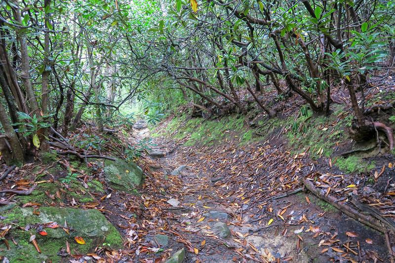 Cat Gap Loop Trail -- 2,900'