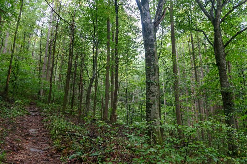 Cat Gap Loop Trail -- 2,730'