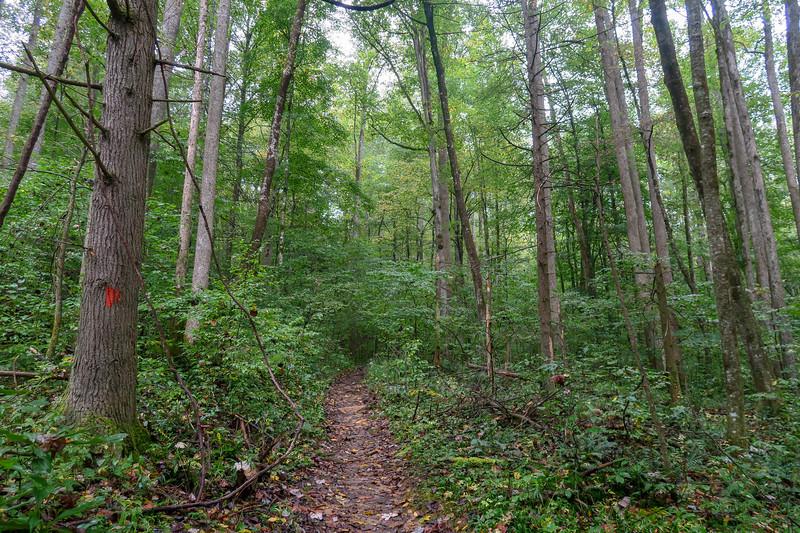 Cat Gap Loop Trail -- 2,620'