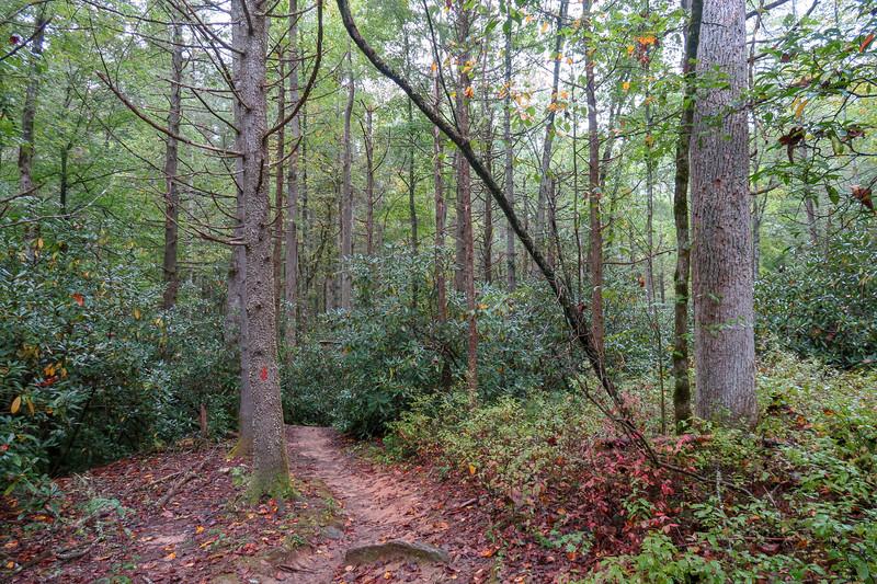 Cat Gap Loop Trail -- 2,650'