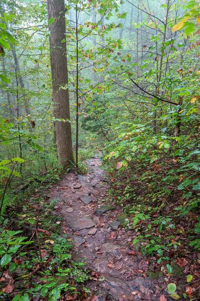 Cat Gap Loop Trail -- 2,960'