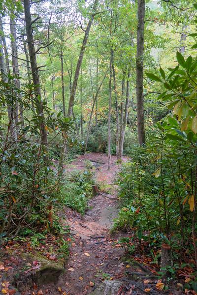 Cat Gap Loop Trail @ Upper Falls Spur -- 2,590'