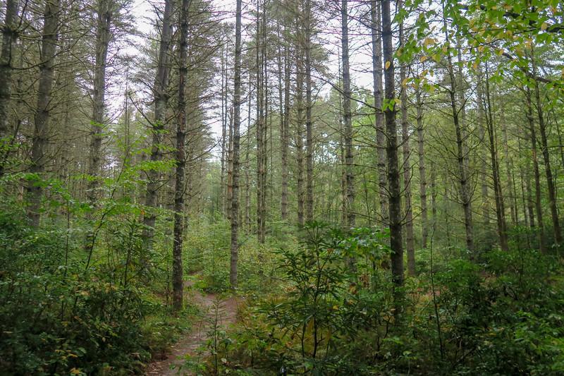 Cat Gap Loop Trail -- 2,610'