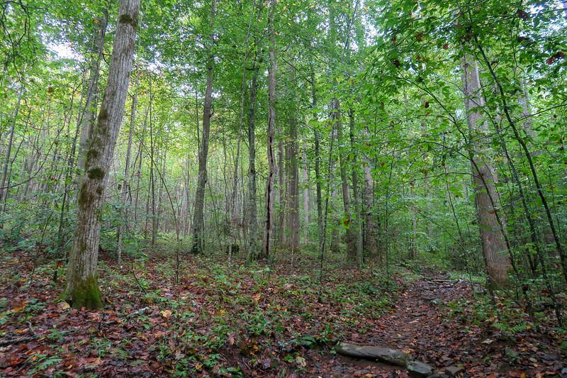 Cat Gap Loop Trail -- 2,700'