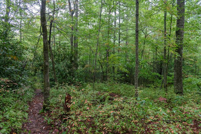 Cat Gap Loop Trail -- 3,050'