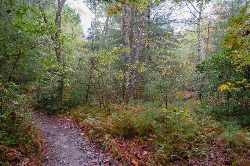 Cat Gap Loop Trail -- 2,590'