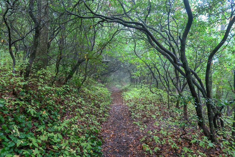 Cat Gap Loop Trail -- 3,320'
