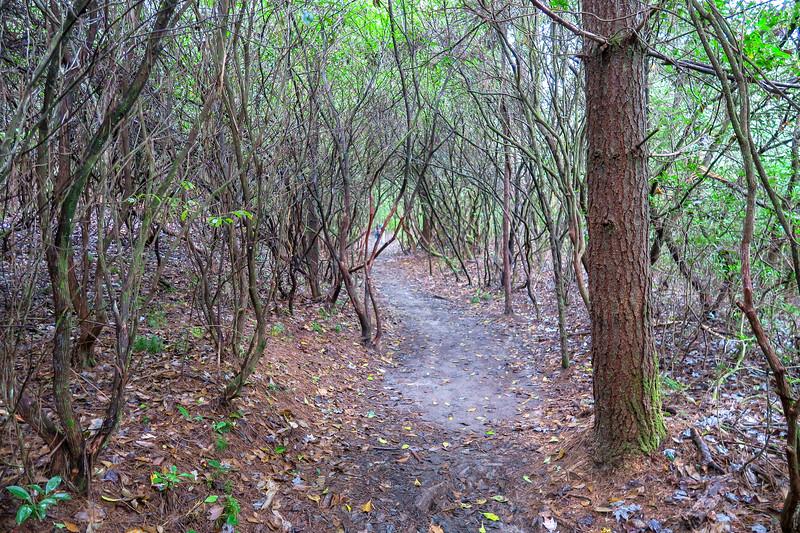 Cat Gap Loop Trail -- 2,600'