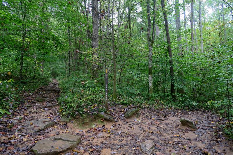 Cat Gap Loop/John Rock Trail Lower Junction -- 2,600'