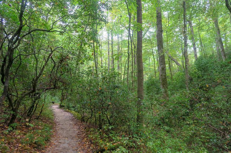 Cat Gap Loop Trail -- 2,420'