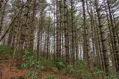 Cemetery Loop Trail -- 3,000'