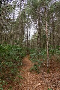 Cemetery Loop Trail -- 2,990'