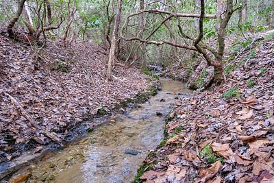 Cemetery Loop Trail -- 2,950'