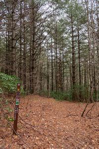 Cemetery Loop Trail -- 3,020'
