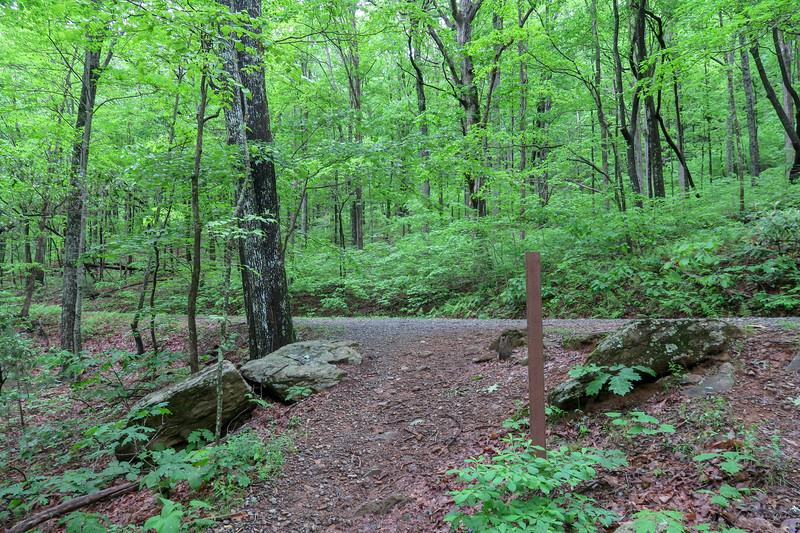 Chestnut Cove Trail @ F.R. 479M -- 2,700'